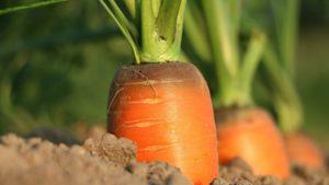 Contenus web : le temps des carottes